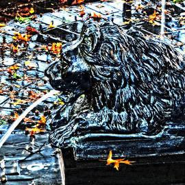 Mike Martin - Fountain in the Fall