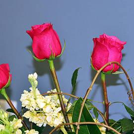 Cynthia Guinn - Four Roses