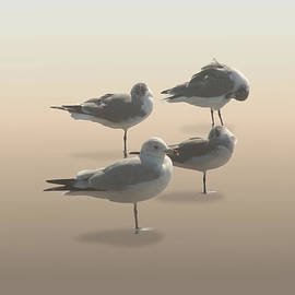 Matthew Schwartz - Four Seagulls on Sand Key