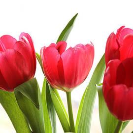 Menachem Ganon - Four Tulips