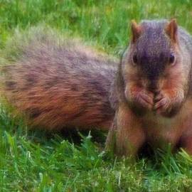 Rory Cubel - Fox Squirrel