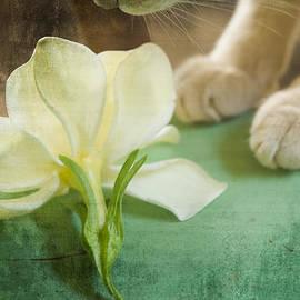 Kim Henderson - Fragrant Gardenia