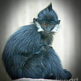 Jim Fitzpatrick - Francois Langur Monkey II