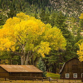 Janis Knight - Franktown Ranch in Fall