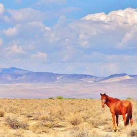 Marilyn Diaz - Freckled Mustang