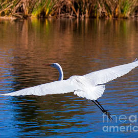 Jerry Cowart - Free As An Egret Bird Ready For Landing