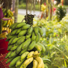 Sharon Mau - Fresh Banana Hana Maui Hawaii