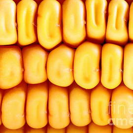 Gregory DUBUS - Fresh corn background