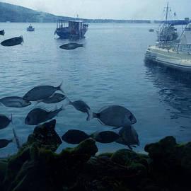 Colette V Hera  Guggenheim  - Fresh Santorini Fish Greece
