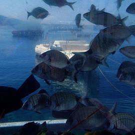 Colette V Hera  Guggenheim  - Fresh Santorini Island Fish Greece