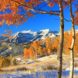 Johnny Adolphson - Fresh snow in the aspens.