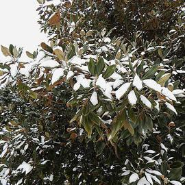 Michael Genova - Fresh Snow Leaves