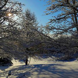 Dianne Cowen - Fresh Snowfall