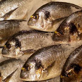 Colette V Hera  Guggenheim  - Fresh Spanish Dorado Fish getting ready for dinner
