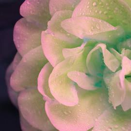 The Art Of Marilyn Ridoutt-Greene - Fresh Water Rose