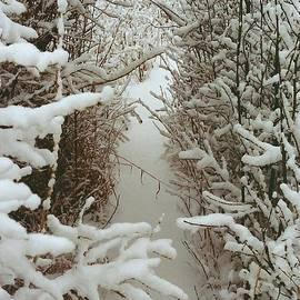 Shirley Sirois - Freshly Fallen Snow