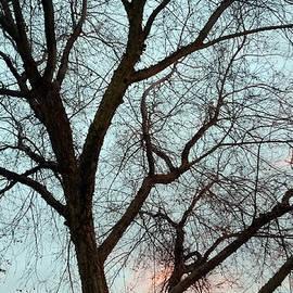 Eric Forster - Fresno Winter Sunset