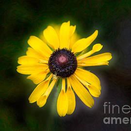 Omaste Witkowski - Friend With Benefits Yellow Flower Artwork by Omaste Witkowski