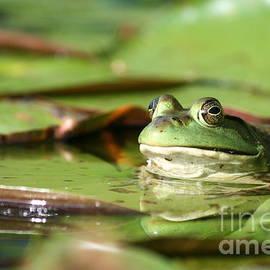 Neal  Eslinger - Friendly Roseland Lake Frog