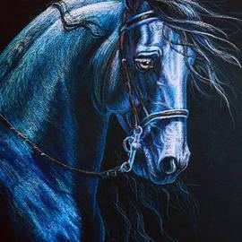 Heidi Carson - Friesian Stallion