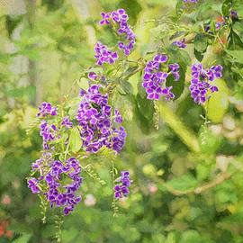 Kim Hojnacki - Frilly Purples