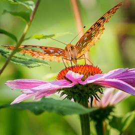 Bill  Wakeley - Fritillary Butterfly
