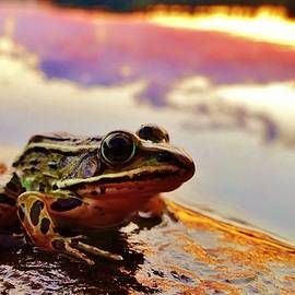 Sarah Pemberton - Frog at Sunset 2