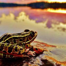 Sarah Pemberton - Frog at Sunset