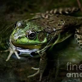 Ms Judi - Frog Floating