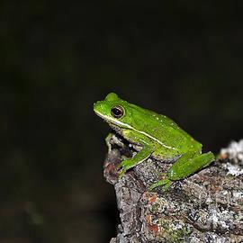 Al Powell Photography USA - Frog on a Log