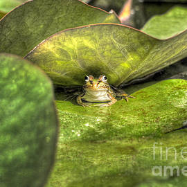 Curtis Radclyffe - Frog on Lily Pad