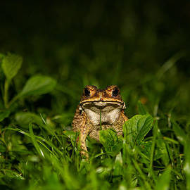 Mike Lee - Frog Stare
