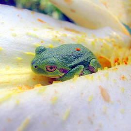 Selma Glunn - Froggie