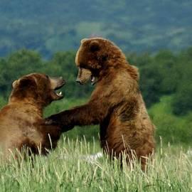 Patricia Twardzik - Frolicking Grizzly Bears