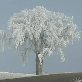 Penny Meyers - Frost Covered Lone Tree