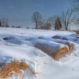 Bill Wakeley - Frosted Wheat