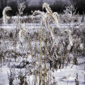 Timothy Hacker - Frosty Grass 3