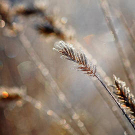 Tracy F - Frosty Grass in the Morning