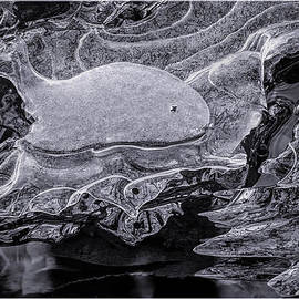 LeeAnn McLaneGoetz McLaneGoetzStudioLLCcom - Frozen Beached Whale