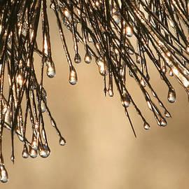 Bill Arthur - Frozen Drop