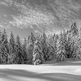 Patrick Jacquet - Frozen forest BW