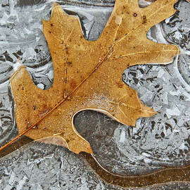 Tom and Pat Cory - Frozen Leaf #1