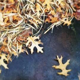 Andrew Amundsen - Frozen leaves