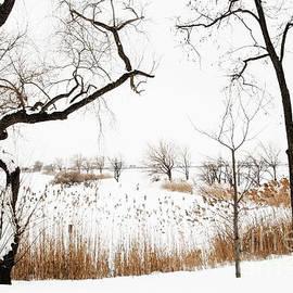 Regina Geoghan - Frozen Marshland III