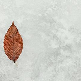 Karol  Livote - Frozen Seasons