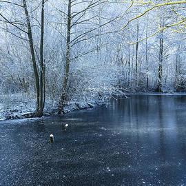 Svetlana Sewell - Frozen