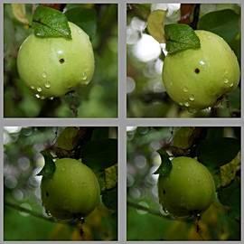 Klaas Hartz - Frucht