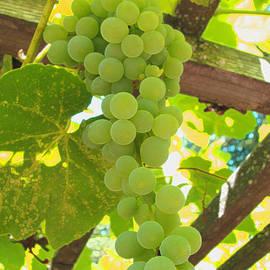 Brooks Garten Hauschild - Fruit of the Vine - Garden Art for the Kitchen