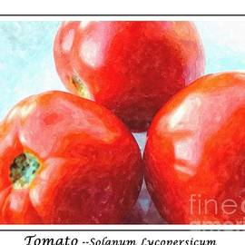 Barbara Griffin - Fruit of the Vine - Tomato - Vegetable