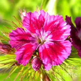 Jackie Burlingame - Fuchsia Flora